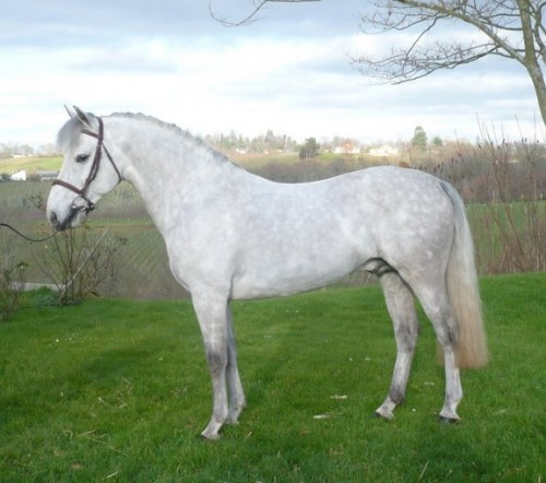 Élevage d'été   Photos : Pilatus de Vinca - Autre cheval Poney
